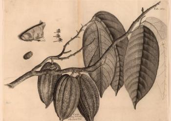 Chocolate's Bitter History