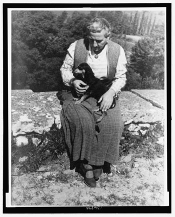 Gertrude Stein and the Future of Intelligence: A Closer Look at JML 43.3