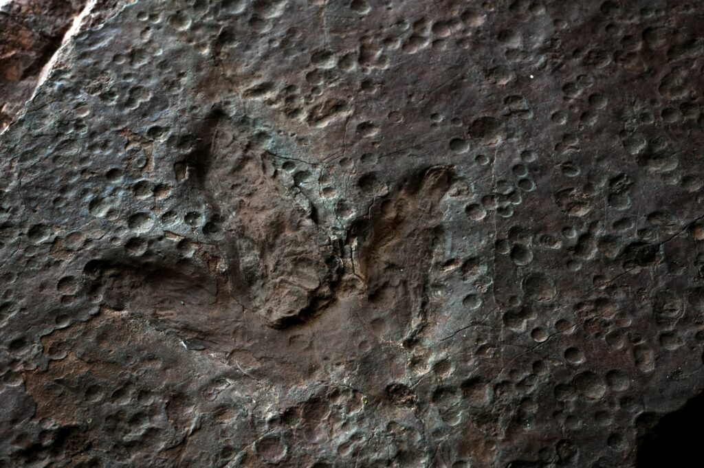 A fine theropod track in a slab from the Sousa Basin