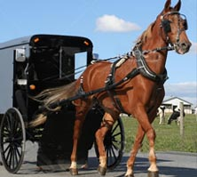 Trip to Amish Country with Molly Jebber