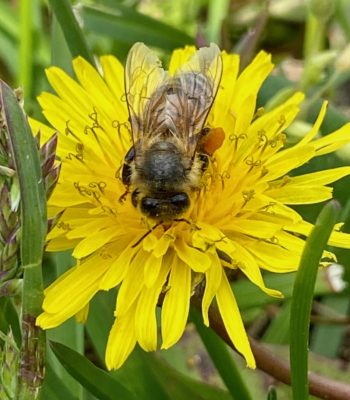 Beekeeping: An Earth Day Tribute