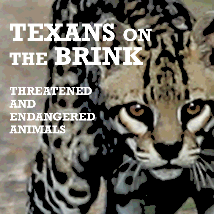 Texans on the Brink: Endangered and Threatened Animals