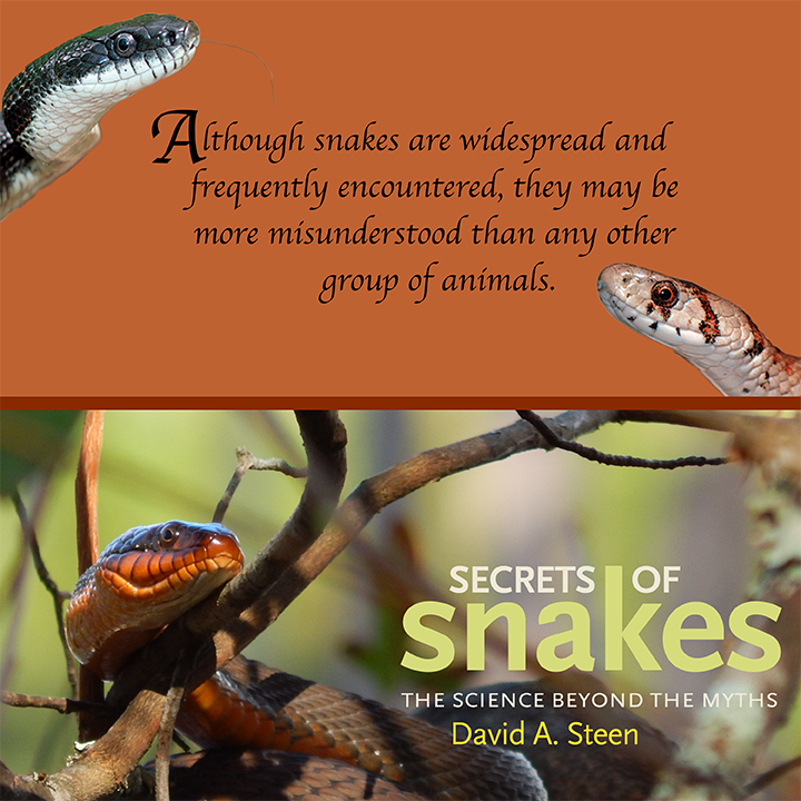 Secrets-of-Snakes-Banners