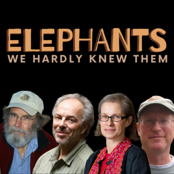 Elephants: We Hardly Knew Them